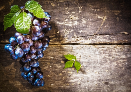 Blue Grapes on Rustic wooden board with copyspace and blank room photo
