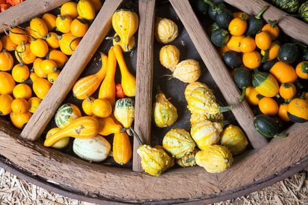 Assortment of different decorated pumpkins in a large wooden wheel photo