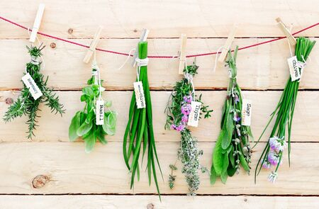 cebollin: Manojos de hierbas frescas con las etiquetas de nombres que cuelgan en una línea de ropa de madera clavijas en un concepto de hierbas medicinales Foto de archivo