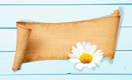 evenings: A Daisy Banner Memo on a light blue wooden background  Beautiful Garden Flower and a structured Memo Board for gardening concepts and celebration evenings
