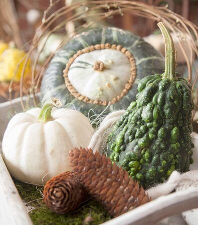 cucurbita: Assorted decorative gourds and some cones arrangement