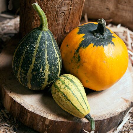 Three different decorative pumpkins on a wooden background Stock Photo - 14072169