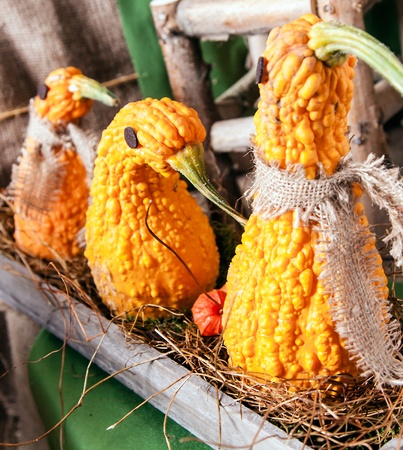 cucurbita: Animal shaped Pumpkins in a row on an old wooden plate