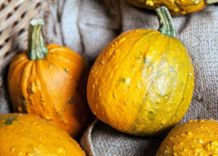 Some yellow Gourds in a crate as a close up Stock Photo - 14072227