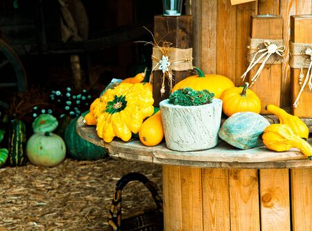 Different Sorts of Pumpkins on a wooden rounded Table for fall concepts photo