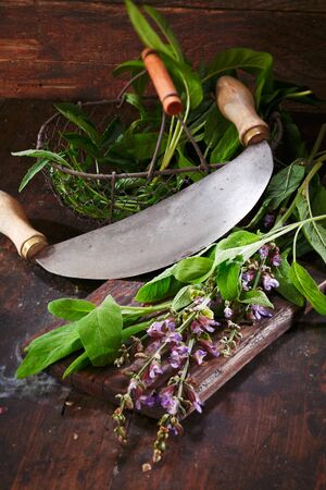 Preparation of sage for cooking with fresh leaves and flowers lying on a wooden table top alongside a rocking blade or knife for chopping photo