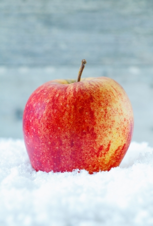 Closeup of a fresh healthy ripe red apple resting in winter snow with copyspace photo