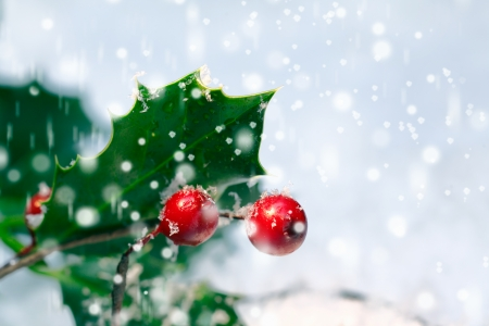 christmas atmosphere: Festive Christmas holly background with bright red berries and spiky green leaves amongst falling snowflakes with copyspace