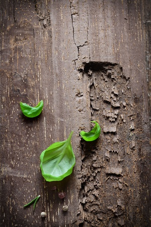 gouged: Three single fresh green basil leaves on a section of old gouged wood with copyspace