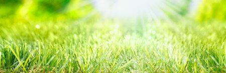 Bright fresh Spring banner with rays of light from a sunburst shining on a lush grassy green meadow photo
