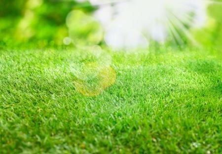 lens flare: Scoppio di luce del sole estivo su erba verde con i riflessi lenti e bokeh per una fresca primavera o estate sfondo Archivio Fotografico