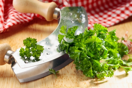 Close up of a modern herb cutter (wiegemes) with wooden handles and a clump of parsley on the blade. Stock Photo - 18995308