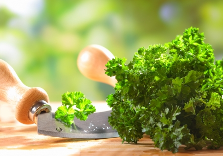 Closeup of a bunch of fresh green crinkly leaf parsley lying on a wooden table outdoors with a curved kitchen blade for chopping