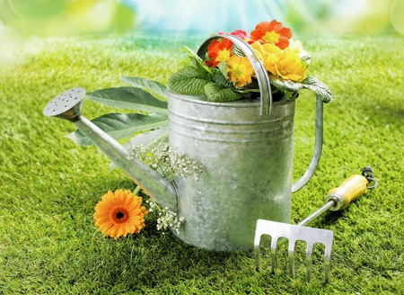 ornamental horticulture: Watering can with a colourful orange gerbera daisy and summer flowers on a green lawn alongside a small fork in a summer gardening concept