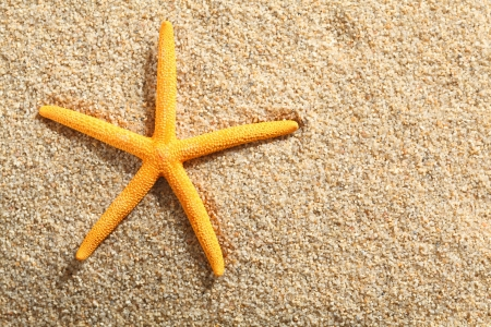 Yellow starfish on a tropical sandy beach, high angle Stock Photo - 19271426