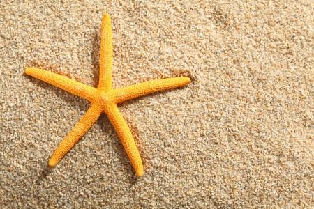 Yellow starfish on a tropical sandy beach, high angle Stock Photo - 19271426