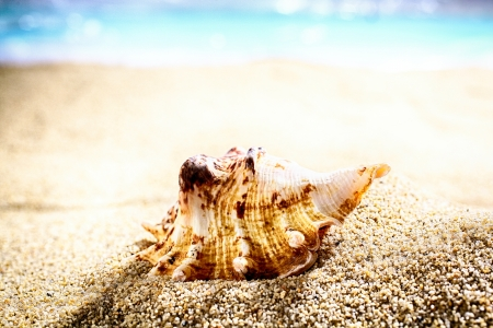 shallow dof: Seashell washed up by the tides lying on beach sand with an ocean backdrop and shallow dof Stock Photo