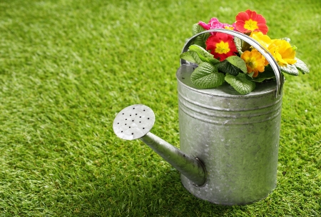 Galvanised metal watering can filled with colourful orange summer flowers standing on a neat green lawn with copyspace photo