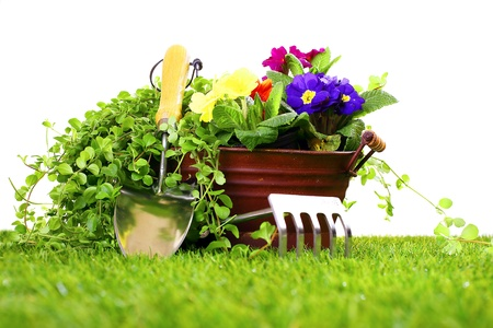Gardening tools like a cultivator, trowel and a metal flower vase with pansies on a green lawn and white background photo
