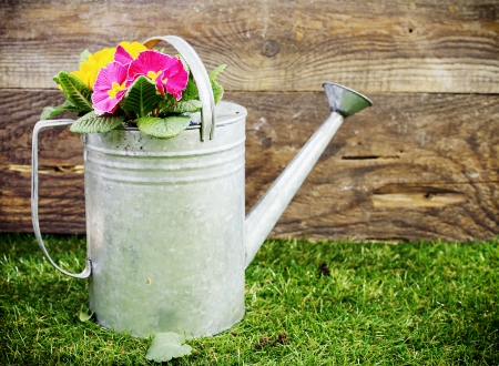 Old galvanised metal watering can filled with colourful summer flowers standing on a neat green lawn in front of the wall of a rustic wooden shed photo