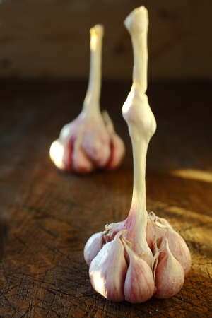 ail: Closeup view with shallow dof of cloves of fresh healthy aromatic garlic on a bulb standing on an old wooden table top