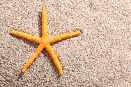 Starfish lying on golden beach sand in the summer sun with copyspace photo