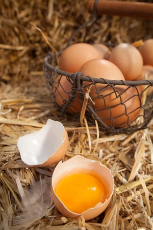 Broken open fresh farm egg with the yellow yolk in one half of the shell on a bed of fresh straw with a wire basket of eggs in the background Stock Photo - 21988909