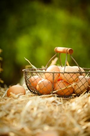 origen animal: Huevos frescos en una cesta metálica en la paja, con un fondo borroso verde