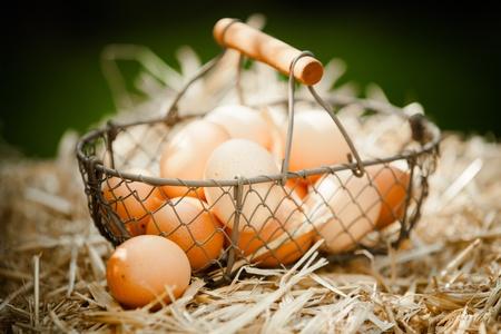 origen animal: Primer plano de huevos marrones frescos en una cesta metálica en la paja