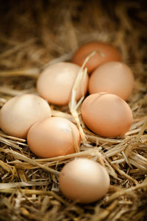 animal origin: Vertical close-up of fresh raw brown eggs on straw