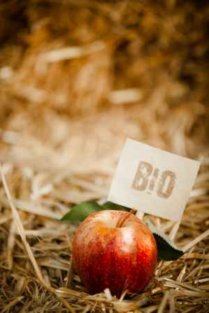 Close-up of tasty red apple on straw, tagged as