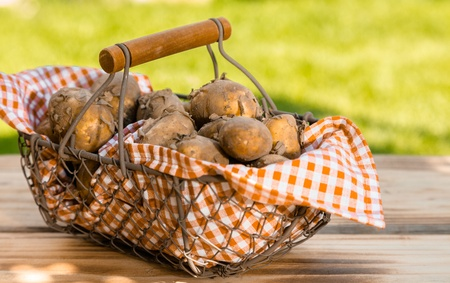 Fresh new potatoes in a checkered cloth in a metallic basket, on a wooden table, outdoors photo