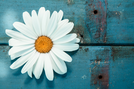 love pic: Close-up of a daisy on a worn wooden surface painted in blue, shot from high angle Stock Photo