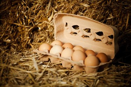 origen animal: Primer plano de diez huevos frescos marrón en caja de cartón en la paja