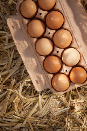 animal origin: Close-up of ten brown eggs in a cardboard carton on straw, shot from high angle