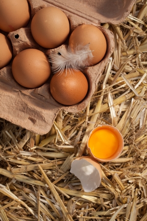 protein source: Overhead view of a carton of healthy brown farm fresh eggs with a feather and one egg broken open to reveal the yellow yolk on a bed of straw