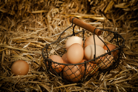animal origin: Horizontal close-up of fresh brown chicken eggs in a metallic basket with wooden handle on straw Stock Photo