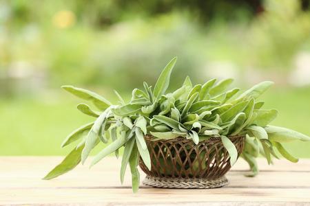 potherb: Disposici�n de salvia fresca arom�tica, un potherb culinaria sabrosa, en una cesta en una mesa de madera en un jard�n de verano Foto de archivo