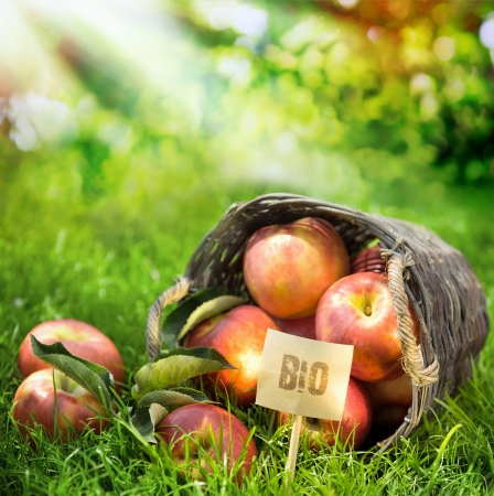 Healthy farm fresh apples graded and labeled Bio produced without chemicals in a wicker basket in a lush orchard with rays of summer sunlight photo