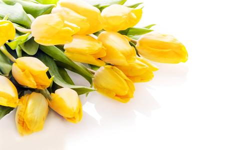 Boeket van levendige gele verse tulpen liggen op een witte achtergrond met copyspace voor uw jubileum of verjaardag wensen