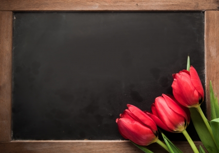 high angle view: Three fresh red tulips arranged in the corner on a vintage school slate with blank copyspace for your text