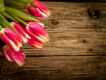 fx: Old weathered wood background with fresh red tulip decoration of a bunch of flowers in the corner with copyspace Stock Photo