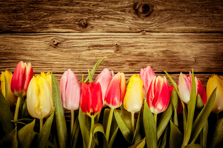 Beautiful fresh tulip border in red, yellow and pink arranged at the bottom of the imageen boards with copyspace and vignetting on rustic wood Zdjęcie Seryjne - 25473381