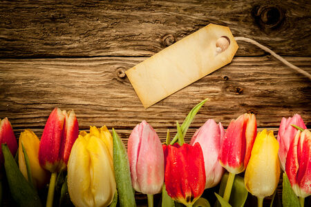 fx: Border of multicoloured fresh tulips on old grunge weathered wooden boards with copyspace for a rustic background