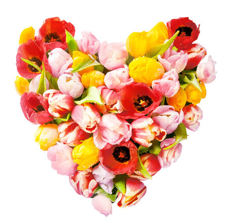 Heart-shaped arrangement of colourful fresh tulips symbolic of love and romance isolated on white in square format for a sweetheart or loved one photo