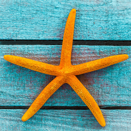 memento: Colourful dried orange starfish on rustic painted turquoise wooden boards, a memento of a summer vacation at the seaside, close up view and texture in square format