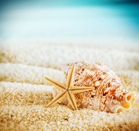 vignetting: Seashell and starfish on a tropical beach lying on the golden sand on a hot summer day in square format with corner vignetting