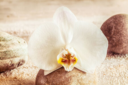 Beautiful white orchid on a summer beach resting on a pebble conceptual of beauty, rejuvenation, pampering and spa treatments photo