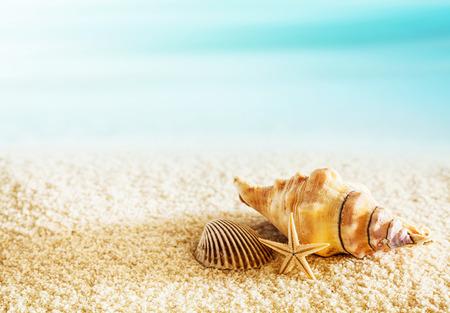 hot summer: Conchas marinas en una playa tropical tumbado en la arena de oro con una estrella de mar bajo el sol caliente del verano con copyspace