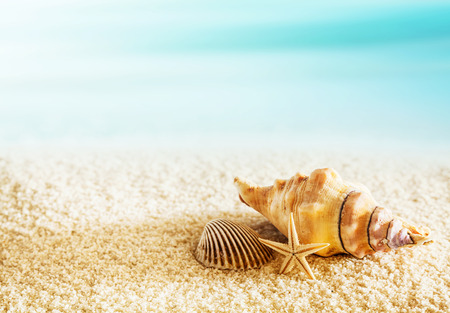 Seashells on a tropical seashore lying on the golden sand with a starfish under the hot summer sun with copyspace Stock Photo